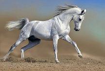 Horses / by V F