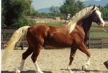 horse love / by Janis Mysinger