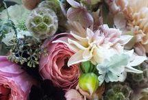• M I X & M A T C H / Bloemen, planten en tuinieren