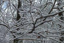 Zima (luty 2015) / Las zimą