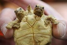 TURTLES / by KennyCat