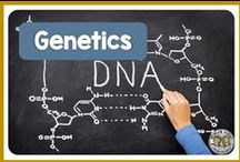 Genetics / Genetics and heredity lessons and activities focused on teaching meiosis, punnett squares, mendel, laws of segregation, heterozygous and homozygous genotypes, and dominant and recessive phenotypes.