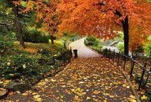 Seizoen - Herfst