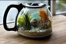 Gardens - terrarium
