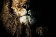 Beautiful Creatures / Beautiful Animals of The World