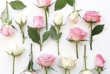 Beautiful Flowers / Flower Power