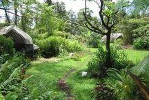 garden permaculture / by Terra Rez