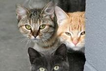 Katten - Cats / If you love cats, this is the place to be!  ;-)
