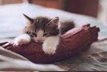 Kitties♥