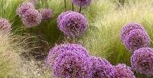 BEPFLANZUNGEN / Hier findest du Pins zu gelungenen Beeten, Beetbepflanzungen und Gartengestaltung mit Pflanzen