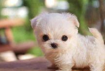 Cutie / Just plain cuteness / by Rowena @ rolala loves