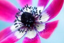 Belles Fleurs / by Rowena @ rolala loves