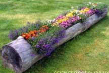 Garden Ideas  / by Erica Dascoli