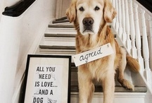 All you need is love...and dogs