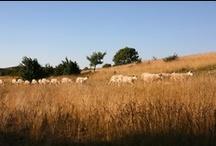 Les animaux de l'Aveyron