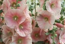 Pink / by Cathy Jordan