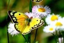 #Butterflies #Birds #Ladybugs #dragonfly / #Butterflies # Birds#Ladybugs #insects #dragonflies #hummingbirds #wings / by Inner Spirit Rhythm