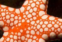 Marine Life / Marine Life .