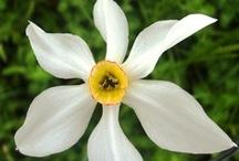 Flore de l'Aveyron
