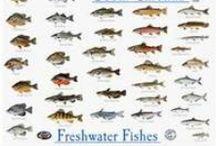 GONE FISHIN'! / by Nikki Abernathy-Francis Whiteley