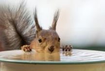 Not All Nuts / by Jeanette Muller-Delia