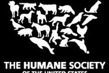 Animal Rescue / We are partnered with The Humane Society of America to help with pet rescue operations around the country! Where will your 20% go? #healthysouls www.healthysouls.org
