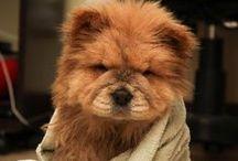 ~ Fluffy Animals ~