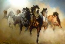 horses / The wind of heaven is that which blows between a horse's ears - Arabian Proverb / by Barbara Alicja