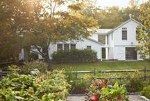 HOME | Gardening / Gardening for urban spaces