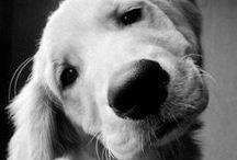 Animals / Mostly doggos