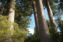 Clean Green New Zealand / De-Stress shares the positive attributes of its origin; natural, clean, green New Zealand.