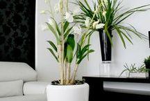 In. Pass Plantas Ornamentales
