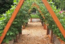 Vegetable Gardens / A garden full of edibles can be beautiful, healthy, provide you wonderful food for gourmet meals. Make your backyard your grocery!