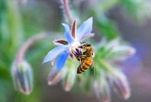 Pollinator Gardening / Attract beneficial pollinators to your garden with these ideas.