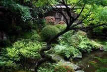 ~ Japanese Garden ~