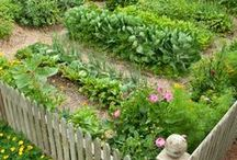 ~ Vegetable garden ~