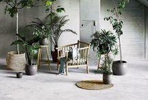 Plants / Inspirational houseplants and decoration |  plant houseplants pot pots interior viherkasvit kasvit vihersisustus sisustus koti kukkaruukku