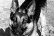 vermist grensgebied / honden in groningen/\drenthe en grensgebied duitsland