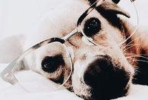 | Animals |