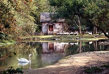 My Old Kentucky Home / by Peggy Faris