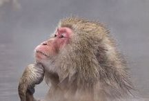 Monkeys / by Khaarmila Ysridel