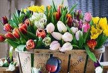 Tavasz & Húsvét - Spring & Easter