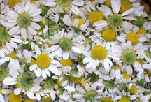 Chamomile and Lavender / Our products