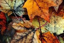 Shades of Autumn / Autumn is here and the nights are drawing in. Be inspired by the colours of the season - rustic browns, rich berries and golden yellows all brighten up your home