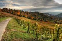 Vineyards, Wine & Champagne / Vineyards, grapes and wine landscape from around the world.