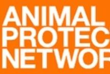 Animal organizations Europe