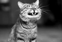 animal humor!