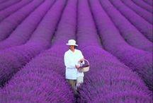 Love all things Purple!! / by Judy Wentz