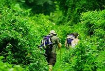 Go Hiking / Hiking is an exciting travel for people, people can get close to nature, meet new friends and experience life.