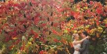 Autumn Weddings / When the leaves fall....
